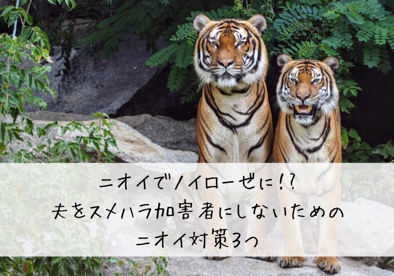 二匹のトラ